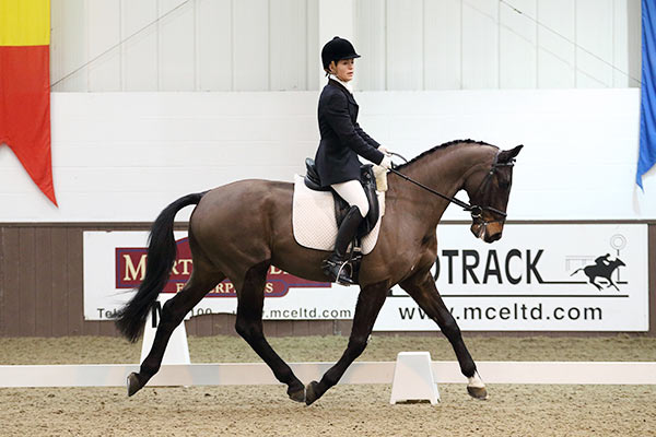 eva corse - trains at berrifield dressage